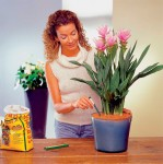 Осень: время пересадки комнатных растений
